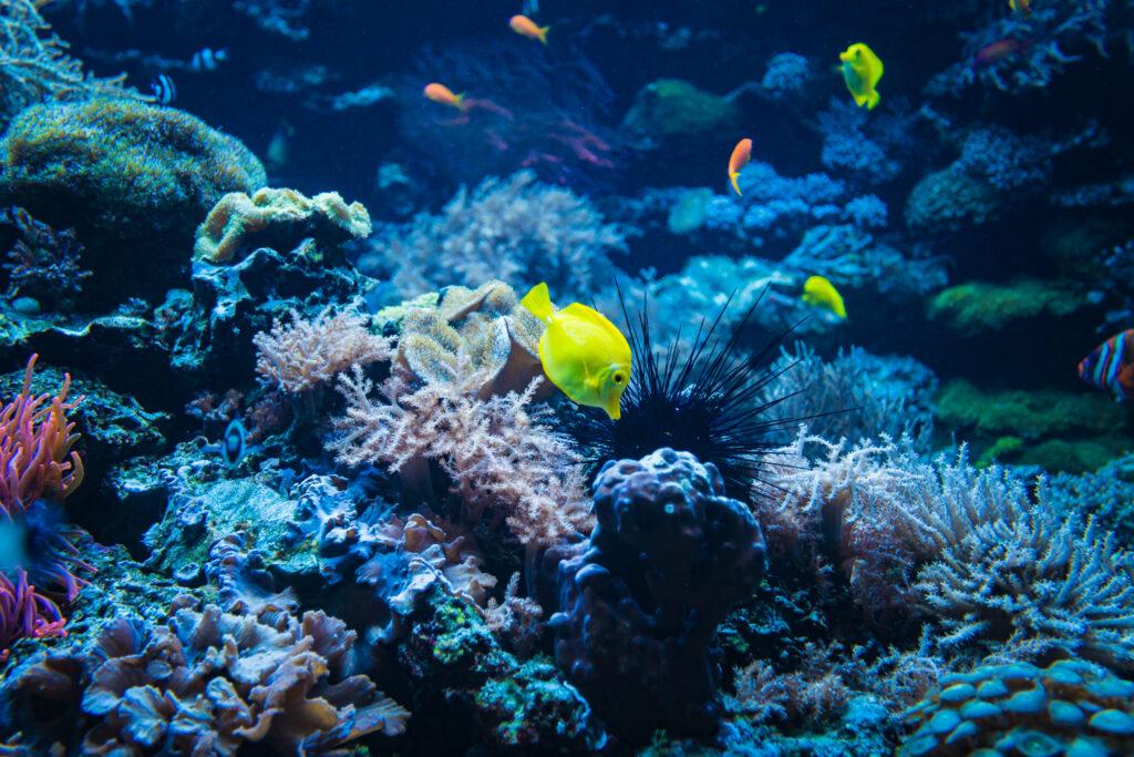 Einweg Unterwasserkamera Test