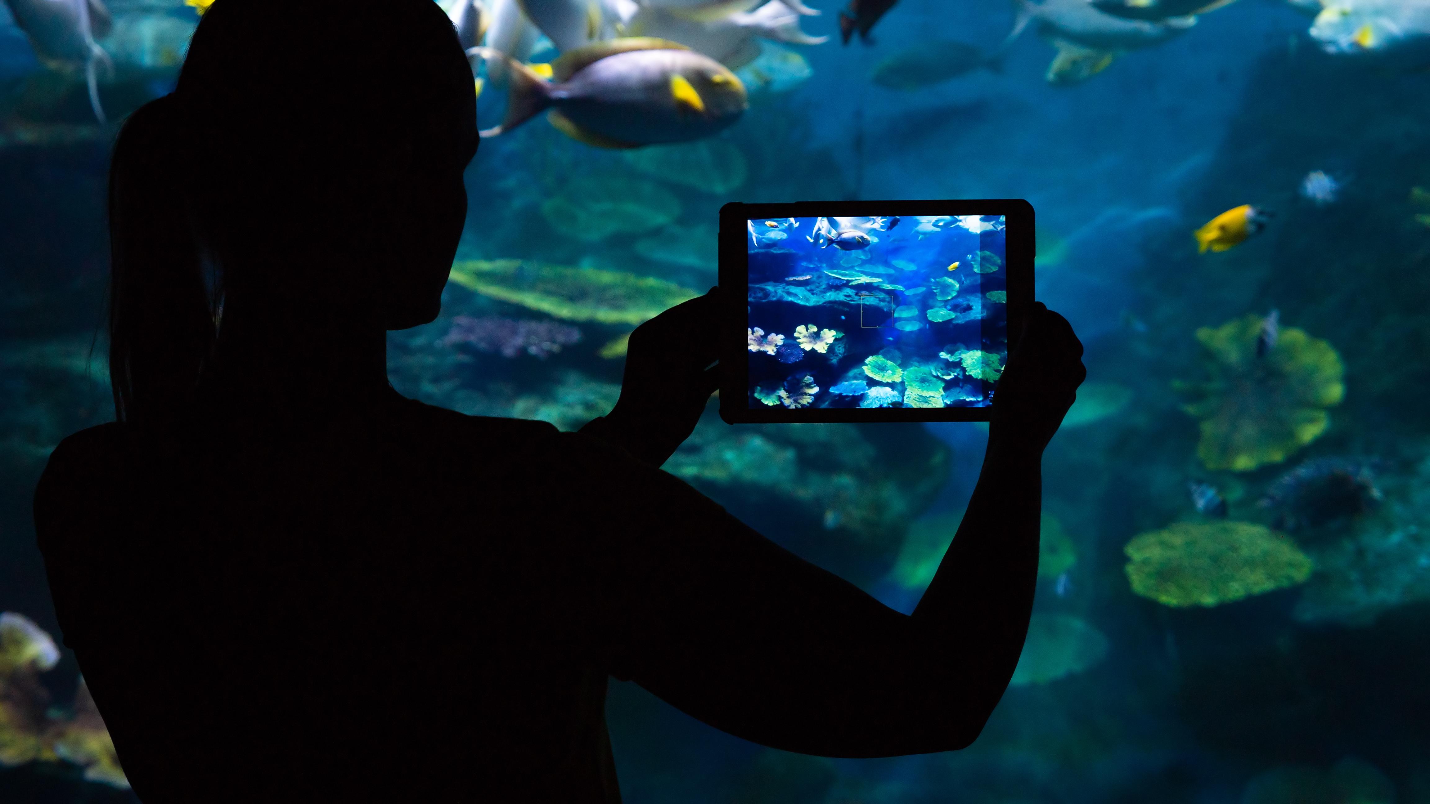 Zubehör unterwasserkameras