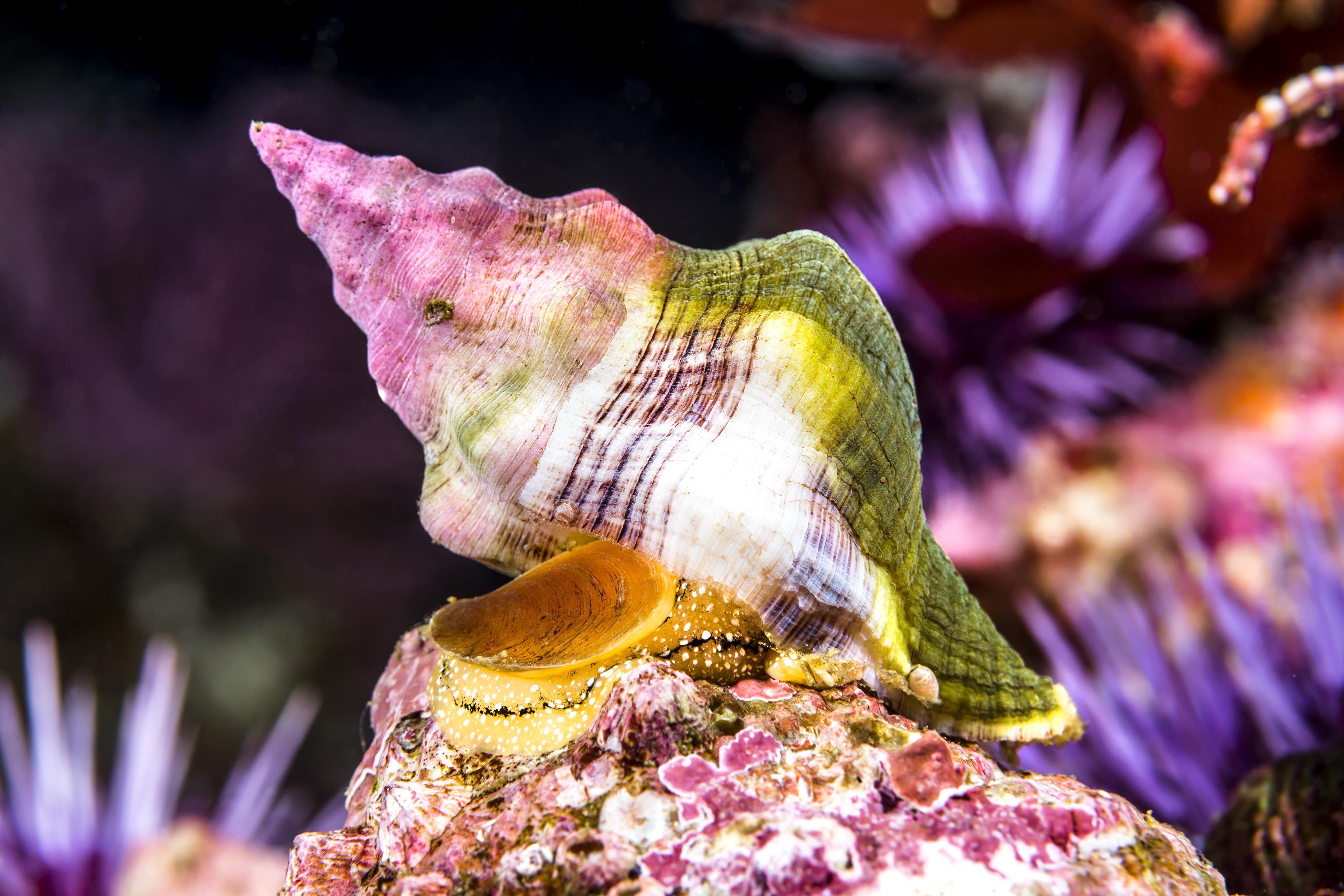 Tipps für Unterwasserfotografie